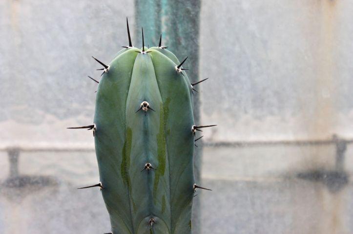 Serre d'Auteuil - serre des cactus et succulentes 3