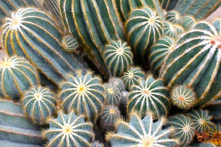Serre d'Auteuil - serre des cactus et succulentes 7