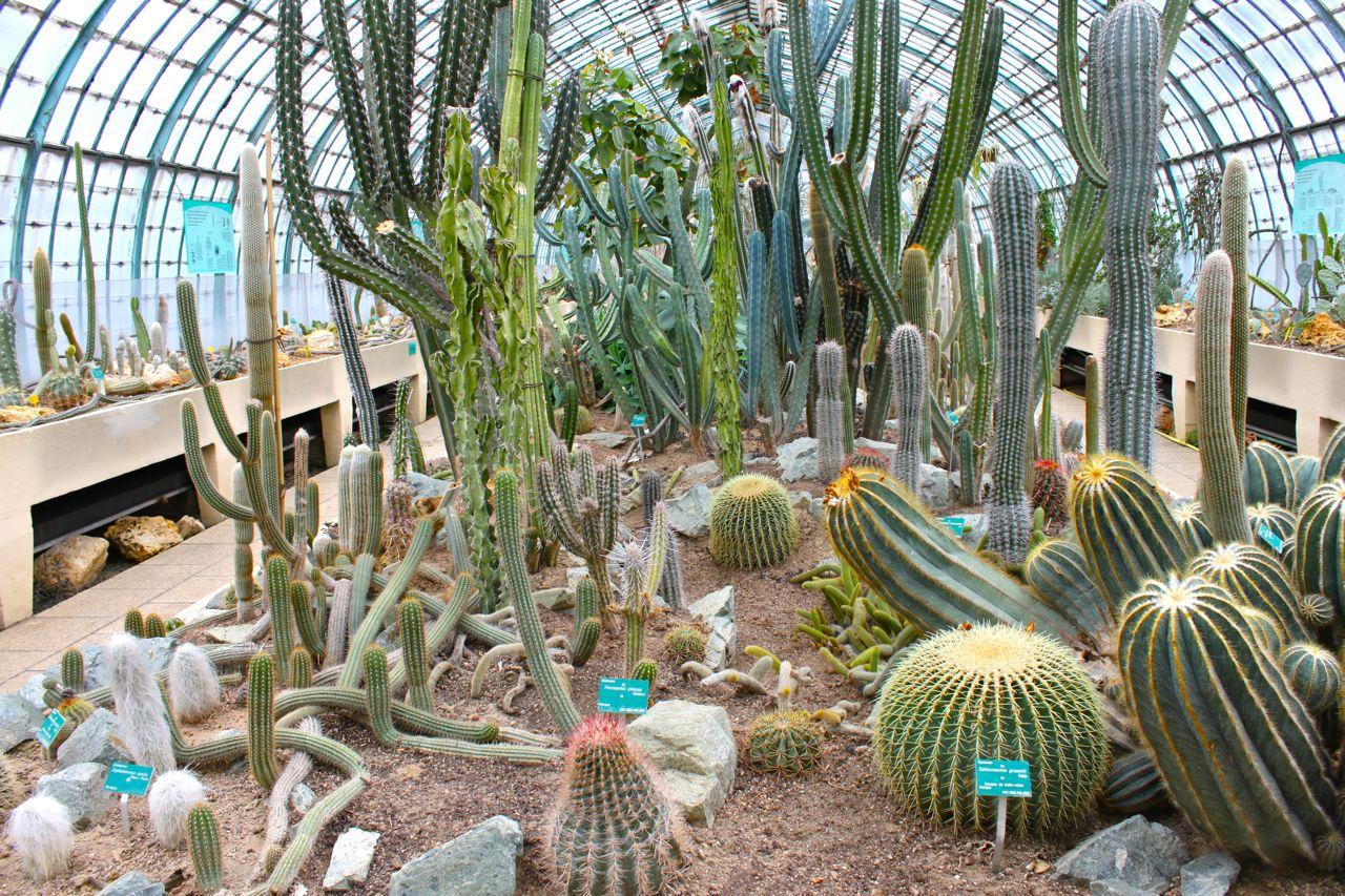 cactus paris