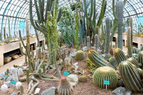 Serres d'Auteuil : voyage mexicain dans la serre descactus
