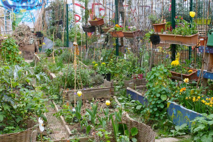 La Goutte Verte - Jardin Communautaire - Paris 1