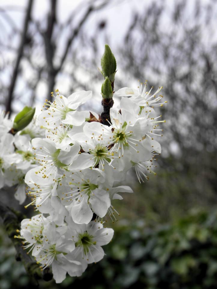 Fleurs Auvers 3