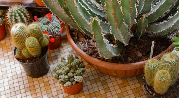 Les succulents cactus boutique   1