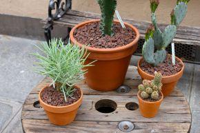 Paris l'été est un Succulent(s)cactus
