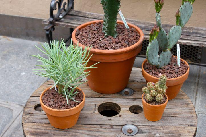 Les succulents cactus boutique 2