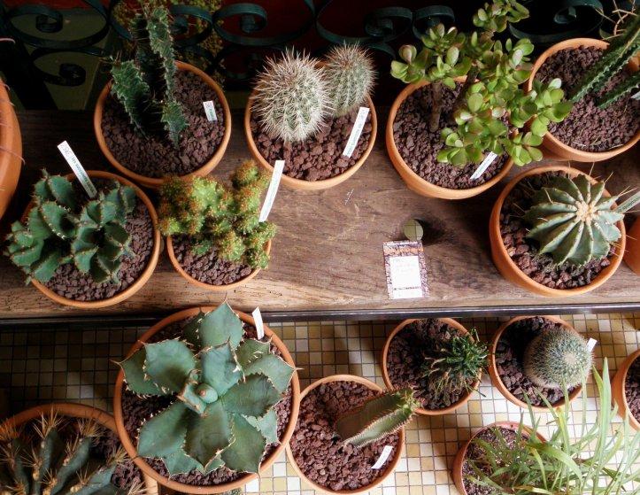 Succulents cactus 3