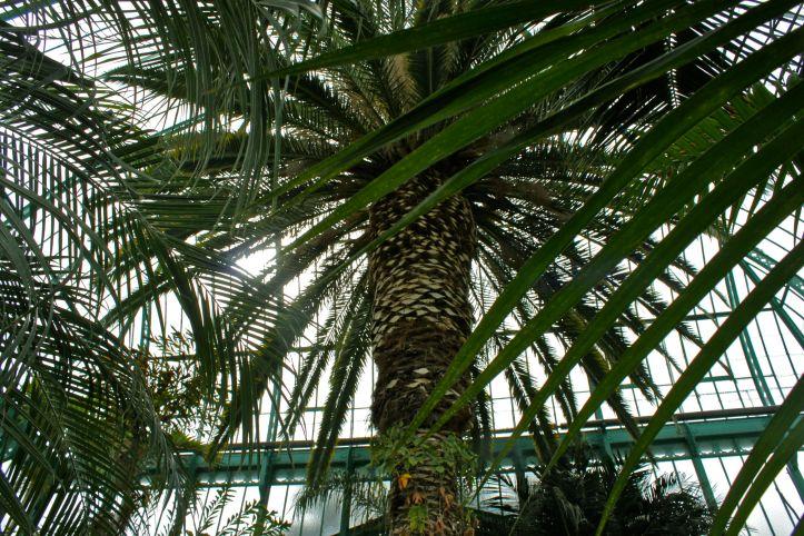 Serres d'Auteuil - Palmarium et Serre Tropicale 04