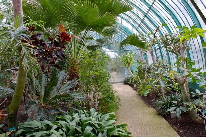 Serres d'Auteuil - Palmarium et Serre Tropicale 09