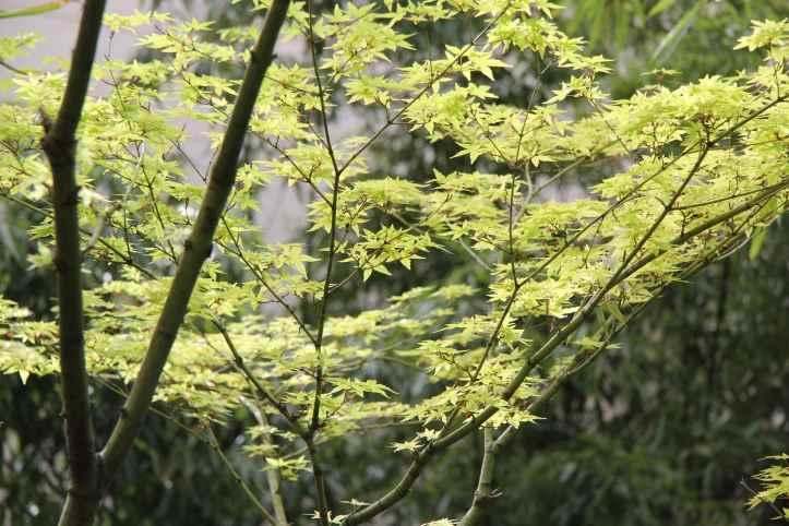 Jardin Japonais Guimet (22)