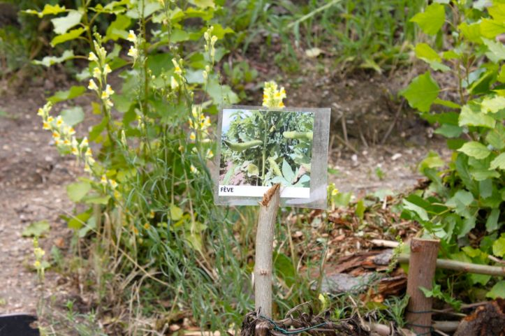 Jardin afghan quai de valmy guerrilla gardening 3