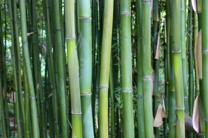 Jardin d'Agronomie Tropicale 05