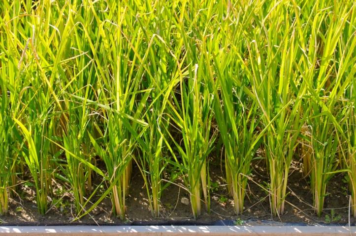 Jardin d'Agronomie Tropicale 3