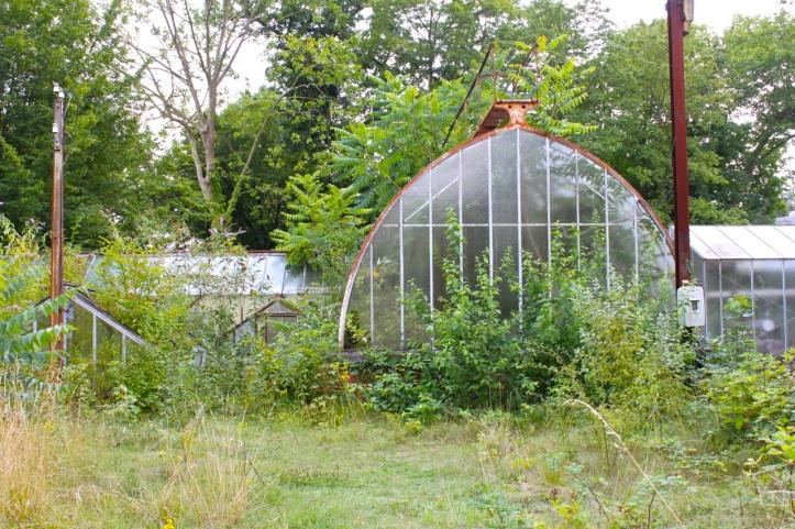 Jardin d'Agronomie Tropicale 7