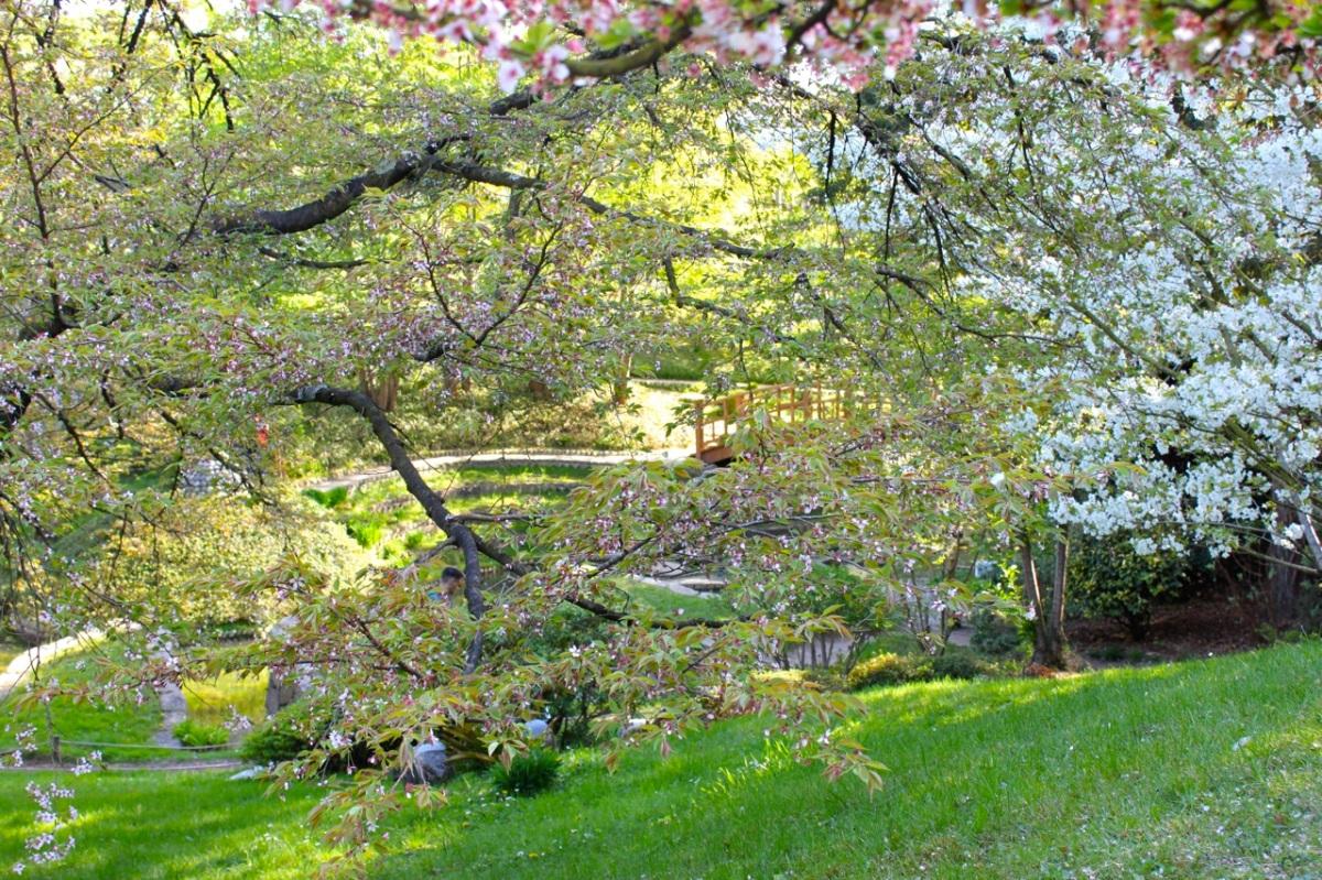 Les deux jardins japonais du musée Albert-Kahn