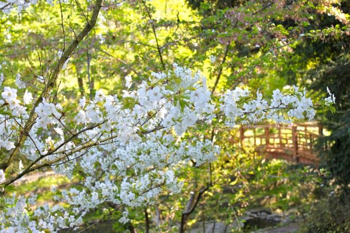 Albert Kahn - Jardin japonais contemporain 6