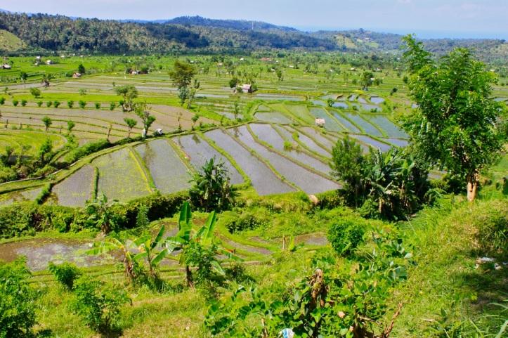 Carnet de voyage - offrandes de Bali 16