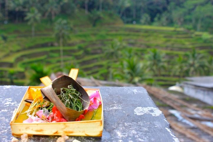 Carnet de voyage - offrandes de Bali 20