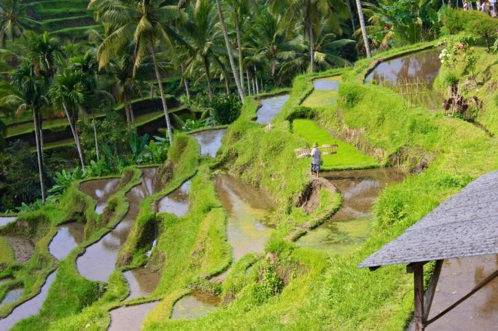 Carnet de voyage - offrandes de Bali 21