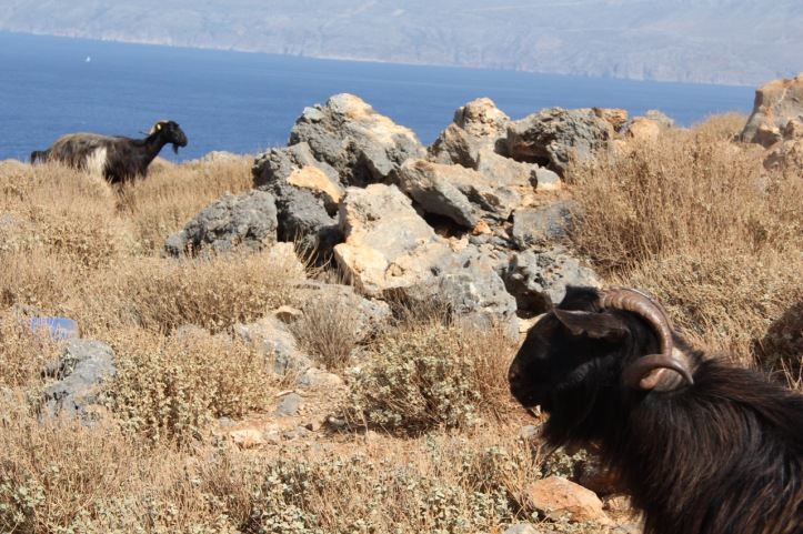 Carnet de voyage Crete - 70