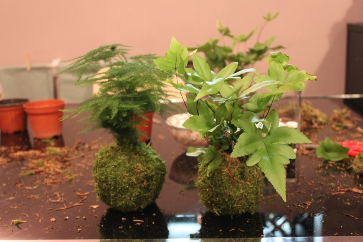 Kokedama japonais Girls and Roses 12