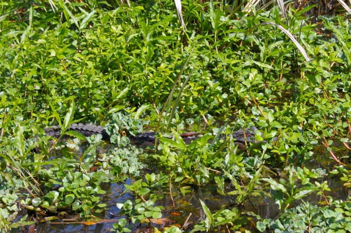 Houma Bayou Louisiane 1