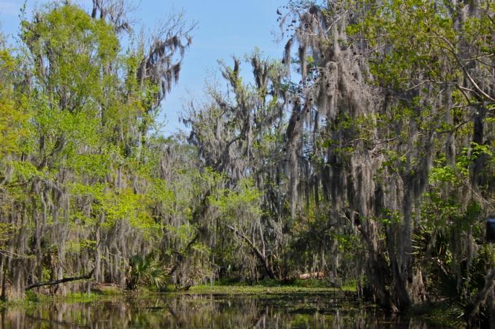 Houma Bayou Louisiane 4
