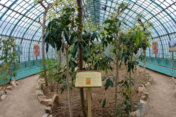 Serres d Auteuil - Vegetation du Sahel 1