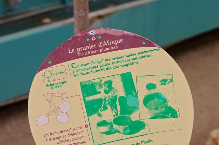 Serres d Auteuil - Vegetation du Sahel 4