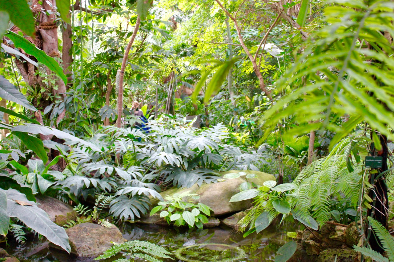 La nouvelle cal donie dans les grandes serres du jardin for Animaux jardin des plantes