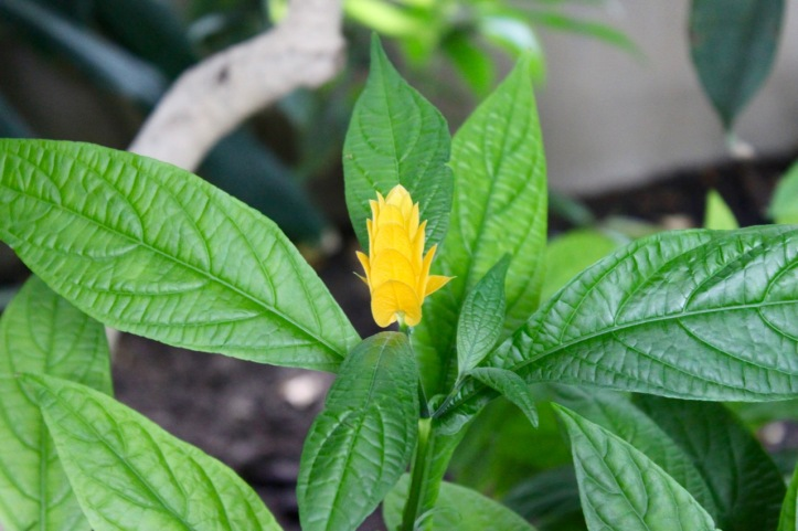 Nouvelle Caledonie Serre Jardin des Plantes - 3