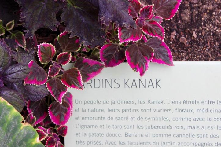Nouvelle Caledonie Serre Jardin des Plantes - 5