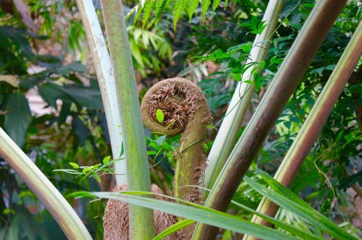 Nouvelle Caledonie Serre Jardin des Plantes - 6