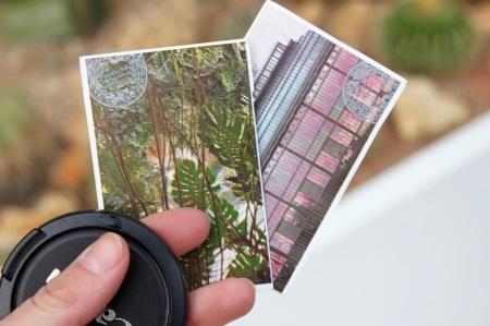 Nouvelle Caledonie Serre Jardin des Plantes  - 9